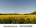 field of rape chain and... | Shutterstock . vector #505326088