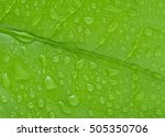 drops of water on tea leaves | Shutterstock . vector #505350706