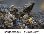 lava rocks formation and small... | Shutterstock . vector #505363894