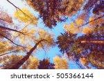 The Autumn Foliage Of Tall...