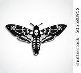 deaths head moth vector... | Shutterstock .eps vector #505580953