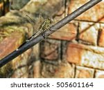 Motionless Dragonfly Sitting O...
