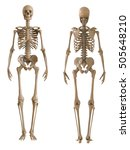 Skeleton Front And Rear View....