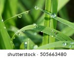 Fresh Grass With Dew Drops In...