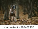 Great Dane Dog In The Forest I...