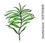 green tropical exotic... | Shutterstock . vector #505703809