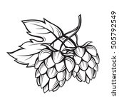 black illustration of hops for... | Shutterstock .eps vector #505792549
