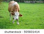 cow | Shutterstock . vector #505831414