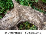 Small photo of old dry snag against green grass in the forest, dead tree branch against alive grass top view, brown grey wooden snag as texture