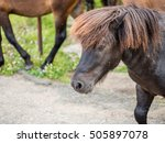 Rural Dark Brown Pony Horse On...