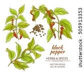 black ground pepper   Shutterstock .eps vector #505913353