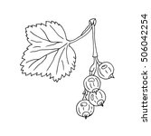 currant hand drawn with leaf... | Shutterstock .eps vector #506042254