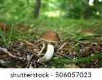 brown mushroom | Shutterstock . vector #506057023
