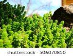 bright  green bush  close up   Shutterstock . vector #506070850