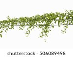 ivy green with leaf on isolate... | Shutterstock . vector #506089498