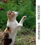 Stock photo hunter s leap 50615530