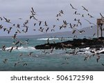 hundreds of blue footed boobies ... | Shutterstock . vector #506172598
