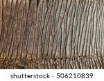 Close Up View Of Palm Tree Bark ...