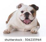Happy Bulldog Puppy Looking At...