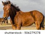 wildlife altai. a few wild... | Shutterstock . vector #506279278
