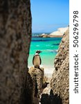 Small photo of African penguin on Boulders beach, South Africa
