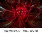 close up of succulent echeveria.... | Shutterstock . vector #506312920