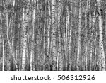 birch forest background  black... | Shutterstock . vector #506312926