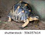 portrait of radiated tortoise...   Shutterstock . vector #506357614