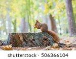 squirrel | Shutterstock . vector #506366104
