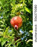ripe pomegranate on a branch   Shutterstock . vector #506375080