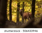 Deer With Background Autumn...