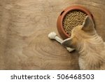 corgi dog besides a bowl of... | Shutterstock . vector #506468503