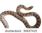 snake isolated over white - stock photo