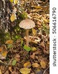 forest mushroom in the woods | Shutterstock . vector #506616790