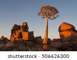 magical quiver tree forest... | Shutterstock . vector #506626300