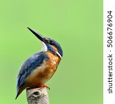 Small photo of Beautiful bird male Common Kingfisher or Eurasian Kingfisher standing on the wooden pole looking for something in the sky.(Alcedo atthis)