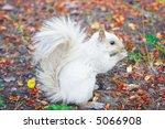 White Albino Squirrel Eating I...