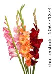 Bouquet Of Gladiolus On A Whit...