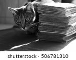 Cat Lurking Behind A Pile Of...