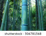 bamboo forest of anduze in... | Shutterstock . vector #506781568