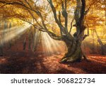 autumn forest in fog with sun... | Shutterstock . vector #506822734