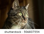 domestic young male cat. home... | Shutterstock . vector #506837554