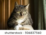 domestic young male cat. home... | Shutterstock . vector #506837560