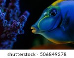 wonderful and beautiful... | Shutterstock . vector #506849278