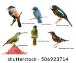 set of beautiful birds | Shutterstock . vector #506923714