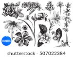 hand drawn highly detailed... | Shutterstock .eps vector #507022384