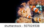 sea anemone and clown fish in... | Shutterstock . vector #507024538