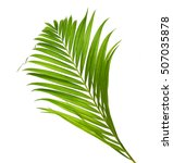 leaves of palm tree with... | Shutterstock . vector #507035878