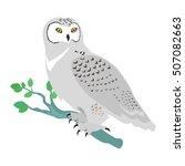 Snowy Owl Vector. Predatory...