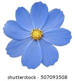 blue flower primula.  white... | Shutterstock . vector #507093508